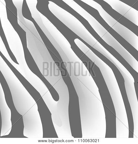 Texture Of Zebra Skin, Black And White Stripes