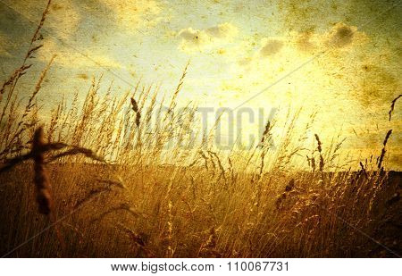 Beautiful grunge background with meadow of grass