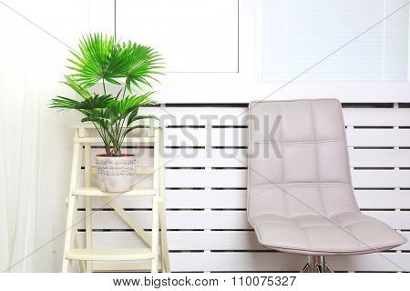 Palm tree (Livistona Rotundifolia) in flowerpot on ladder at home