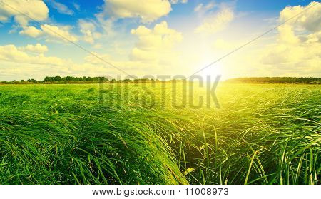 Green Grass Field And Forest Under Sunset Sun On Blue Sky.