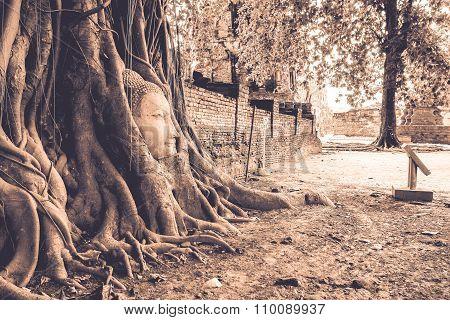 Root Of Banyan Tree Enwrap The Buddha Head