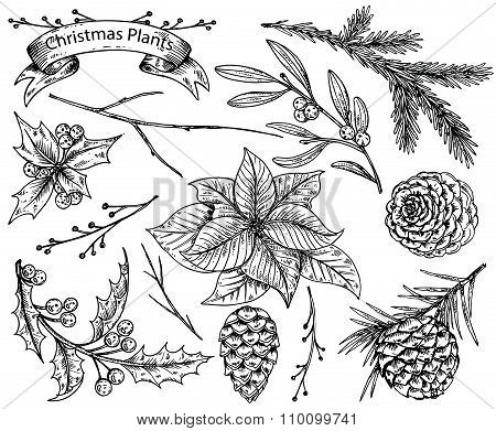 Set Of  Hand Drawn Winter Plants