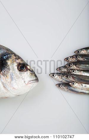Fresh raw anchovies and dorado fish.