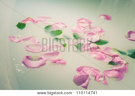 rose petals and leaves float on the milky water, closeup, underwater is white tulle