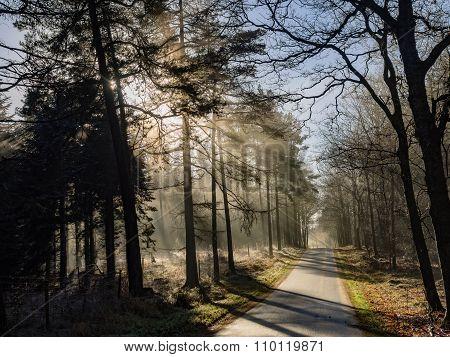 Misty Forest With Fog Near Silkeborg, Denmark