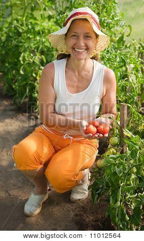 Woman Picking Tomato