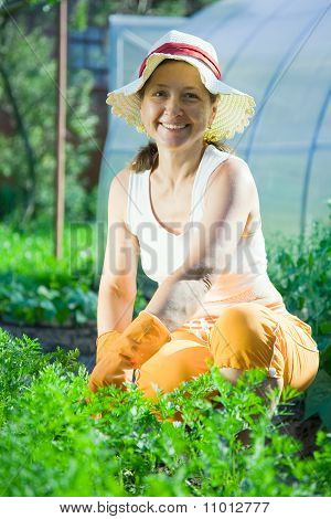 Woman  In Plant Of Carrot
