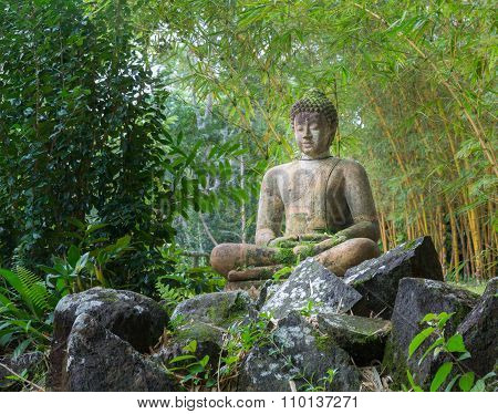 Buddha Statue In Bamboo Forest
