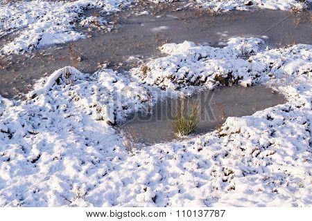 Landscape Of A Winter Bog In The Steppe