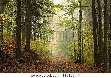 Path through the autumn forest