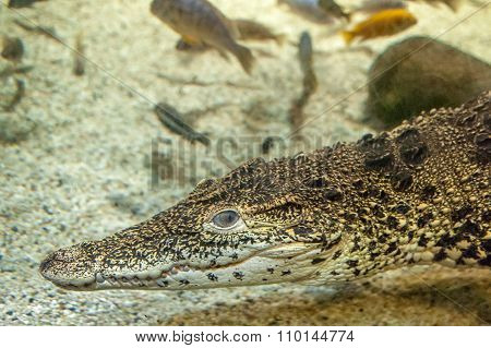 Reptile in water