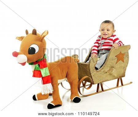 An adorable baby boy waiting for a toy Rudolph to pull the sleigh in which he happily sits.   On a white background.