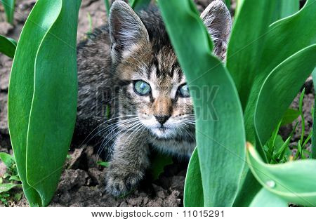 The Kitty On Flowerbed.