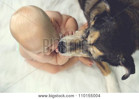 German Shepherd Pet Dog Kissing Baby