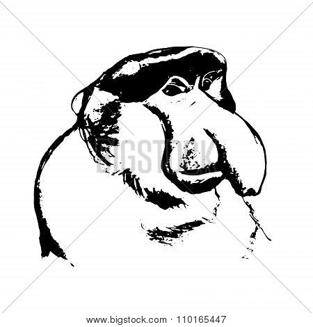 A Monkey With A Big Nose (cahow, Khanin)