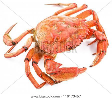 Cooked crab isolated on a white background.