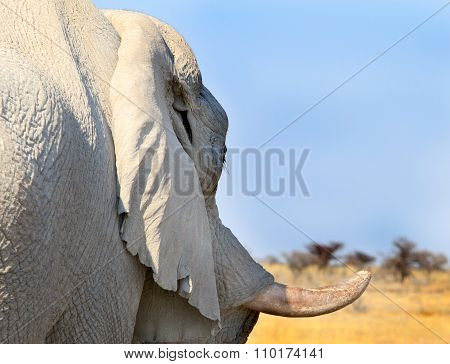 Close-up of an elephant tusk with natural background