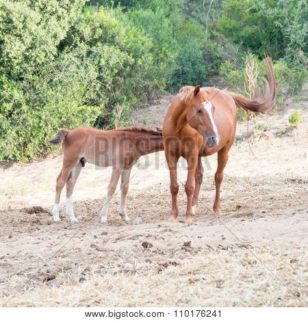 Nursing Parents Sons Horses