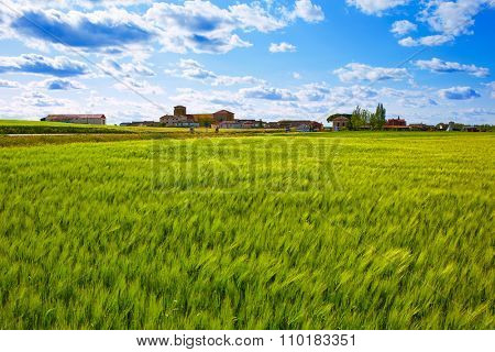 The Way of Saint James in Palencia cereal fields of Spain