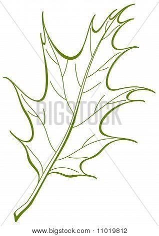 Leaf of oak Iberian