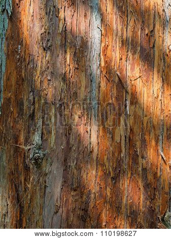 Dappled Light On Tree Bark