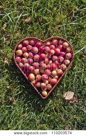 Heart Shaped Wicker Basket  Of Crab Apples On Green Grass