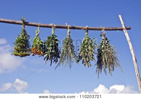 Bundles Of Fresh Medical Herbs Hanged To Dry On  Wooden Stick