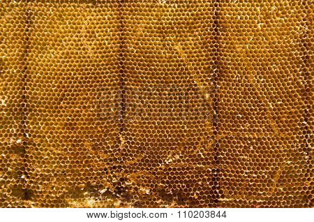 Closeup Of Beeswax Background