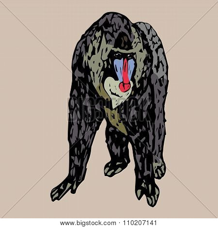 Standing Strong Young Baboon Mandrill