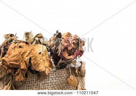 Dried wither flowers in bouquet, on white background