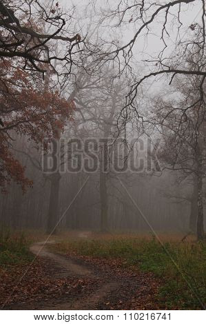 Path leads in autumn foggy forest