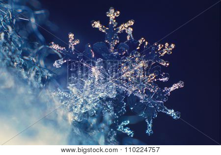 Real snowflake under the microscope