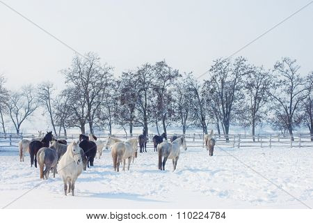 Horses on a farm in winter