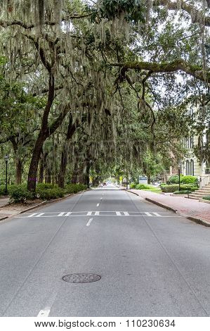 Savannah Street Under Southern Oaks