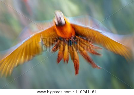 Abstract photo of flying parrot. Out of focus