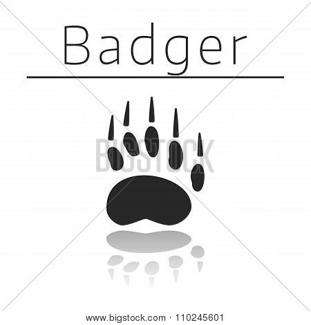 Badger animal track