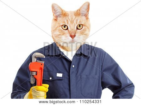 Cat plumber with adjustable wrench isolated on white background.