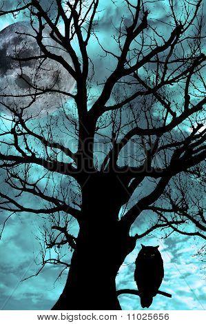 Buho posado en el árbol milenario en noche de Luna