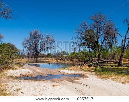 Flooded road in Okavango delta