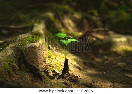 Nature Birth