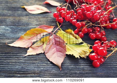 Guelder-rose and autumn leaves on wooden background