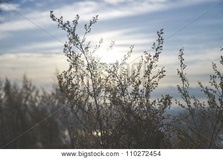 The light of the sun through the dry grass