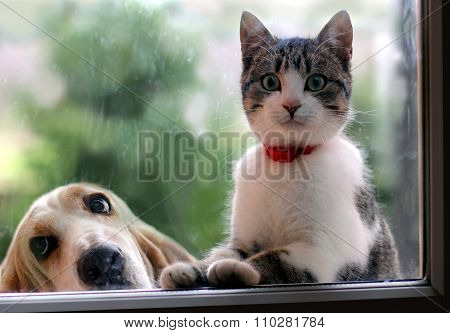 Cat and dog looking through the window