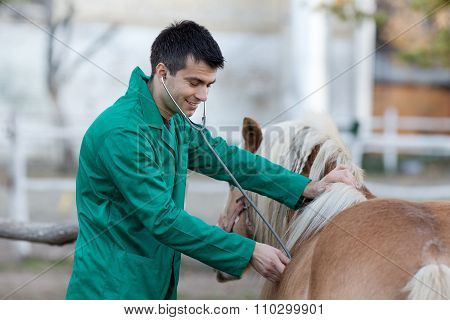 Veterinarian With Pony Horse