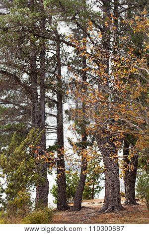 Trees In Bushland