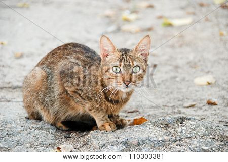 Cute furry cat looking strait at the camera