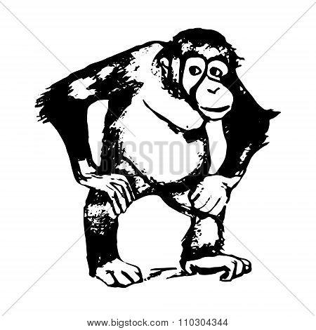 The Figure Of The Monkey - An Orangutan, Graphics