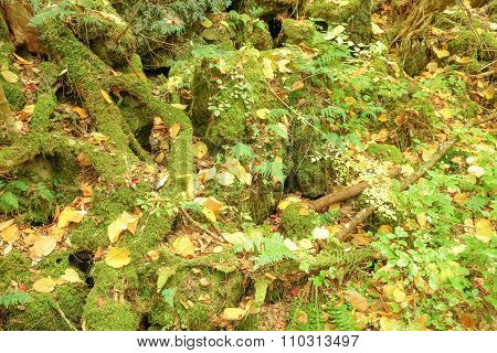 Tree root, moss and fern