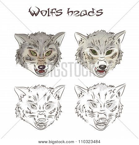 Vector illustration of hand drawn wolves heads. Two of them are painted, two other are scribbled. Th