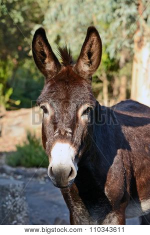 Donkey In The Archaeological Park
